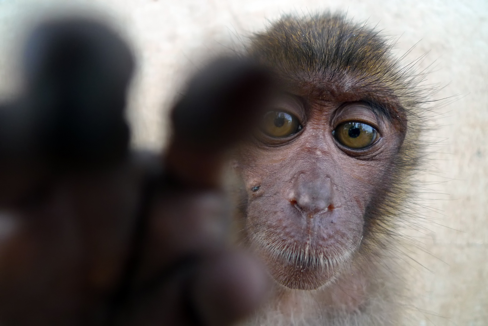 Khao Takiab Monkey 1