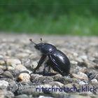 KiB - Käfer in black