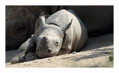 Kibibi aus dem Krefelder Zoo