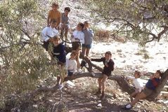 Kids playing in an olive tree