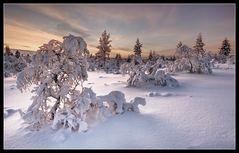 Kiilopää - Lappland III