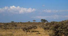 Kilimanjaro Mystery