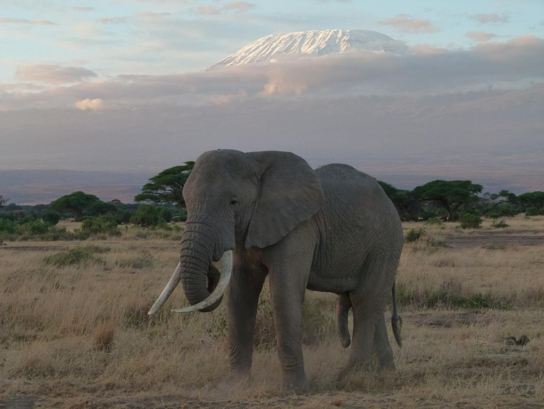 Kilimanjaro und Elefant