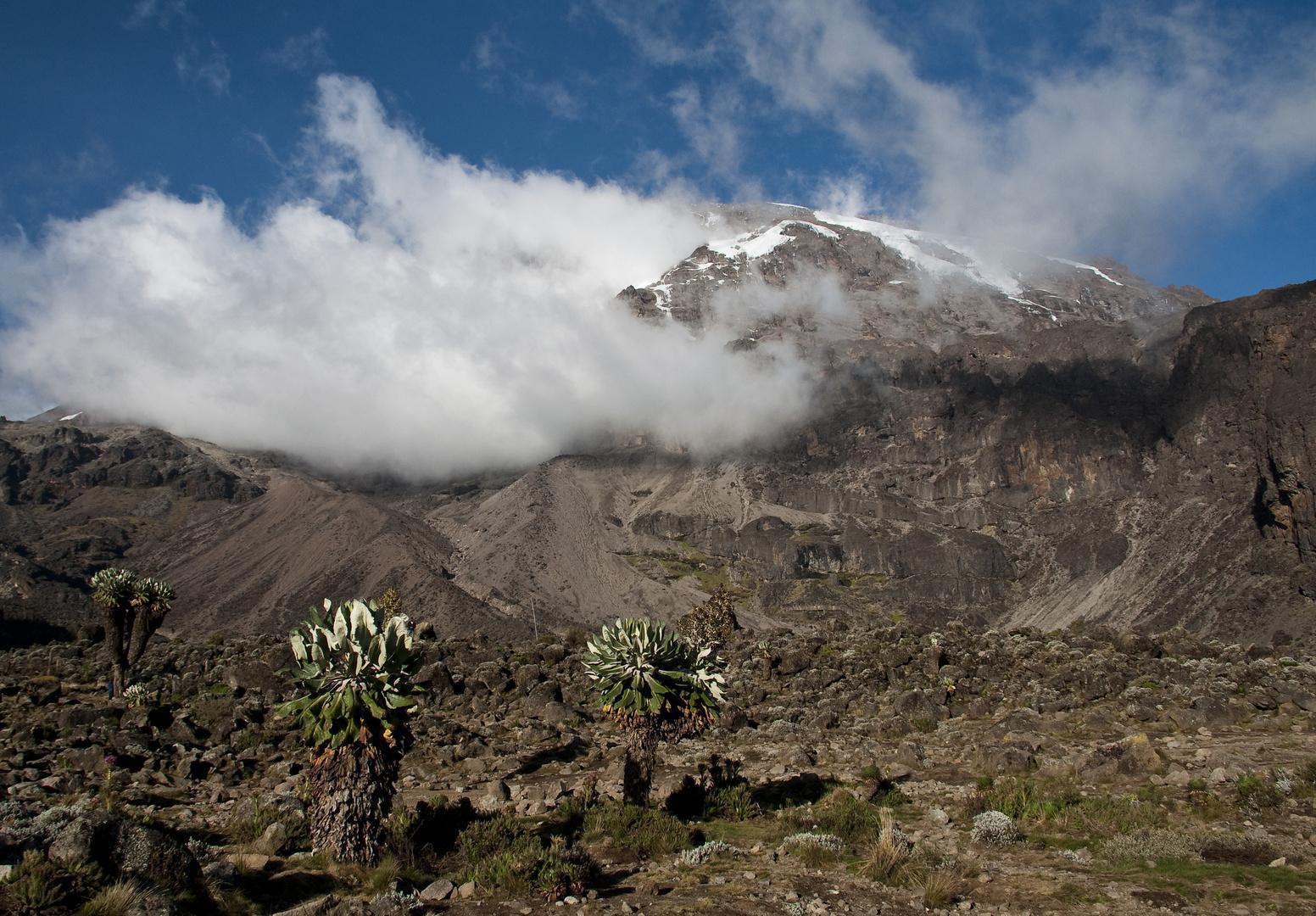Kilimanjaro vom Barranco Camp