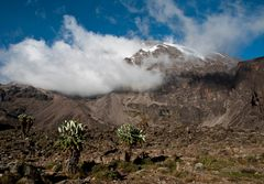 Kilimanjaro vom Barranco Camp