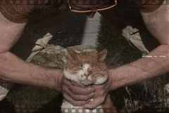 ...kill the cat! (figthclub)