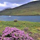 Killary Harbour