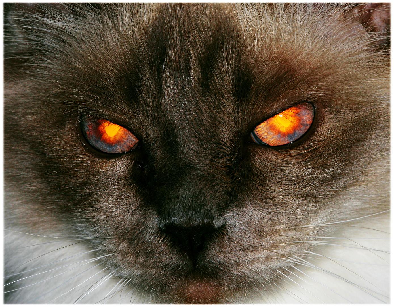 Killercat