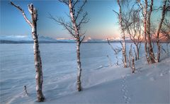 Kilpisjärvi Feeling