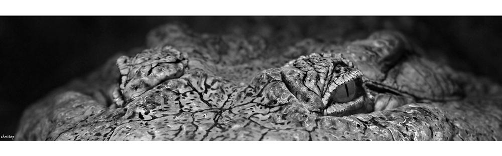 Kilroy ... 1.000 Pixel