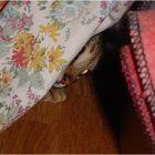 Kimani cat says Peek-A-Boo