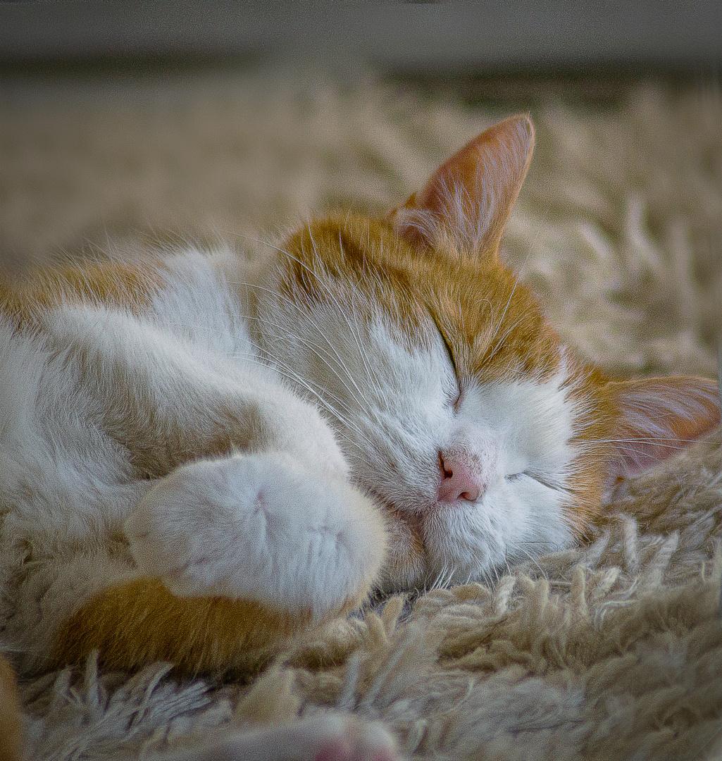 Kimba-schlafend