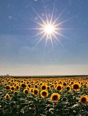 Kinder der Sonne