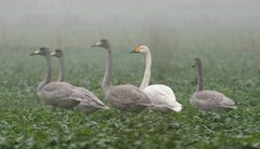 Kinder des Nebels