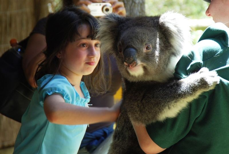 Kinder lieben einfach Koalas
