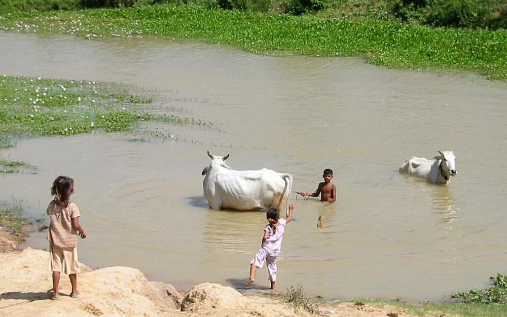 Kinder und Rinder