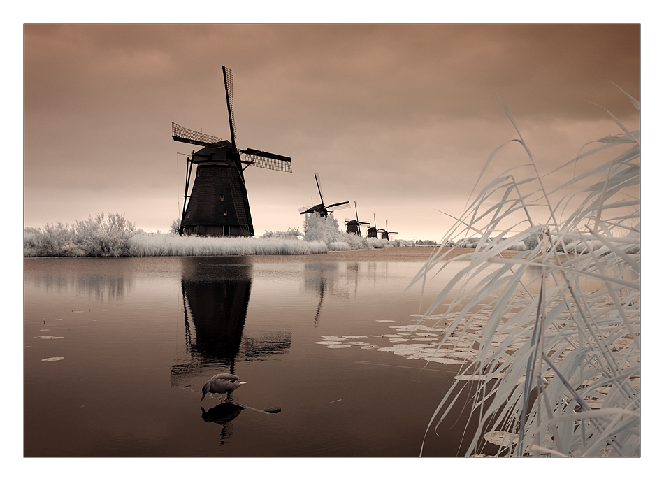 Kinderdijk - 1