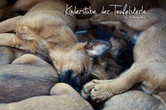 Kinderstube Irish Terrier