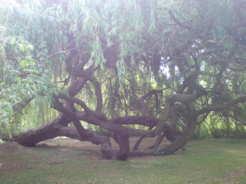 king george park (london)