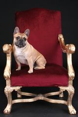 King Hugo I