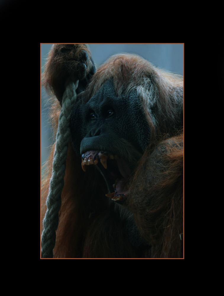 King Kong?