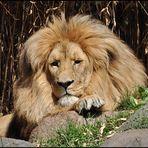 King MATADI