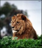 KING OF THE WEEDS..