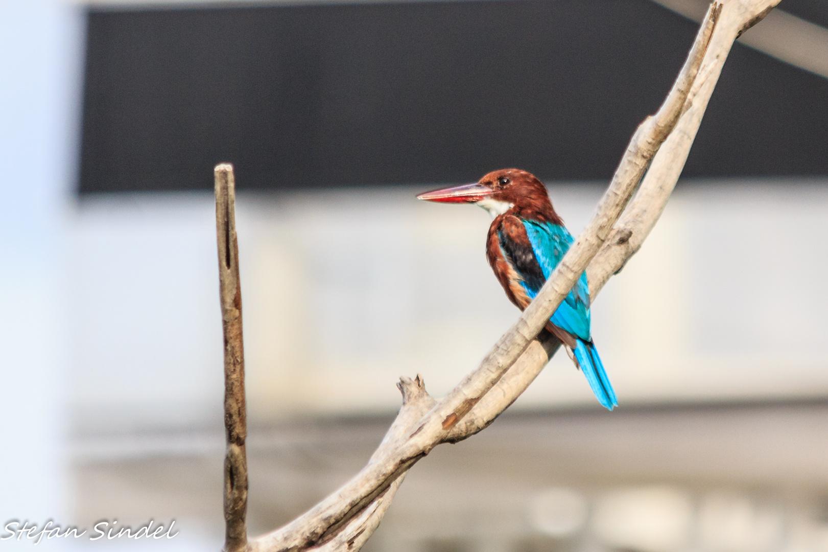 Kingfisher I