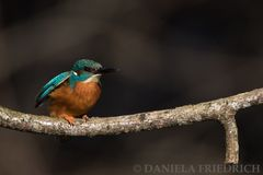 Kingfisher once more