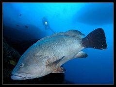 """""""Kings Black Coral Reef"""" (KBCR)..."""