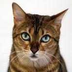 Kira - oder: wie man (s)eine Katze fotografiert!
