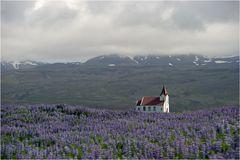 Kirche an Lupinien