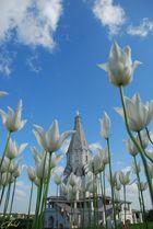 Kirche hinter Tulpen