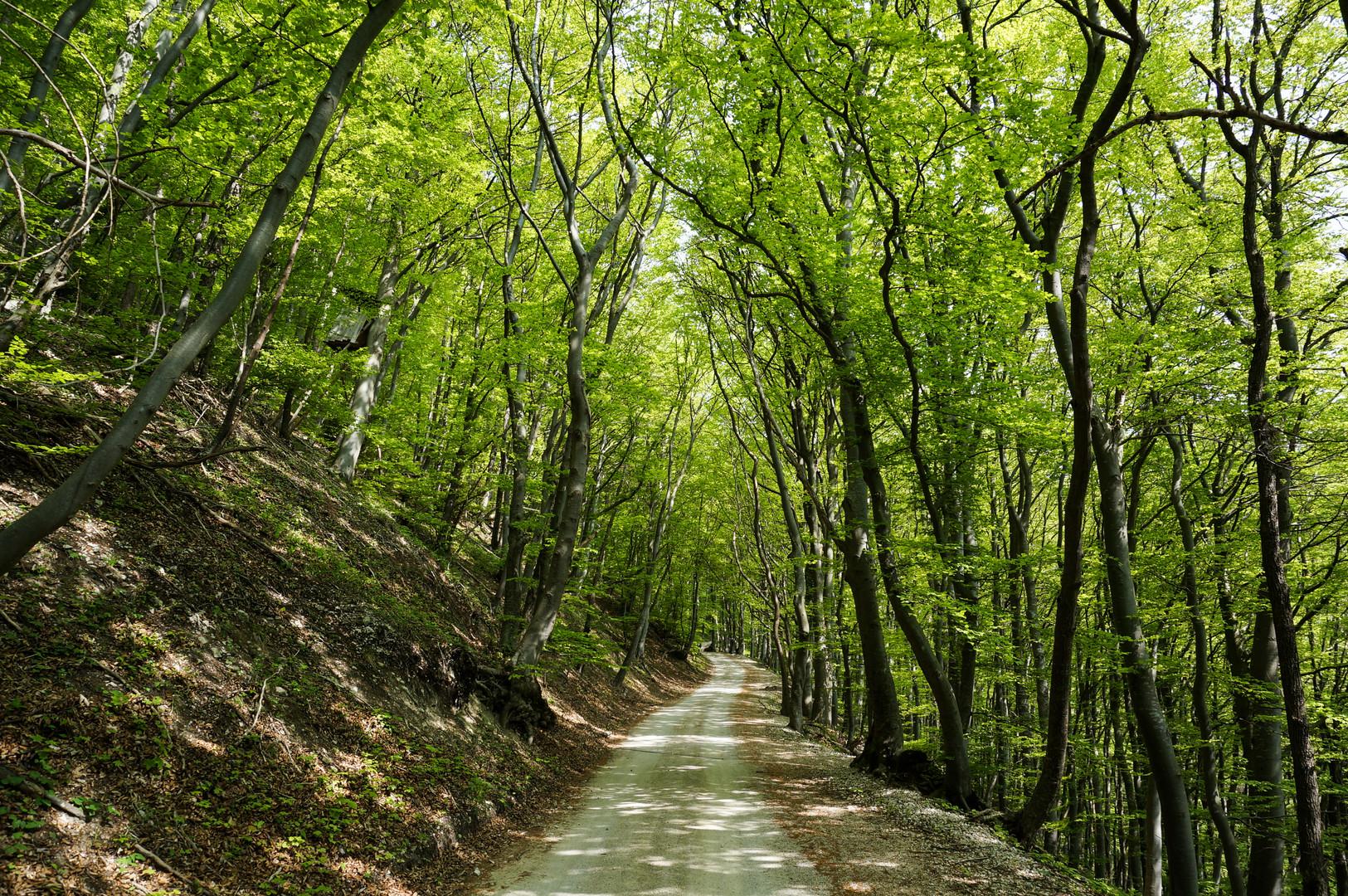 Kirchheim Teck Waldspaziergang