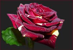 Kirsch-Vanille-Rose