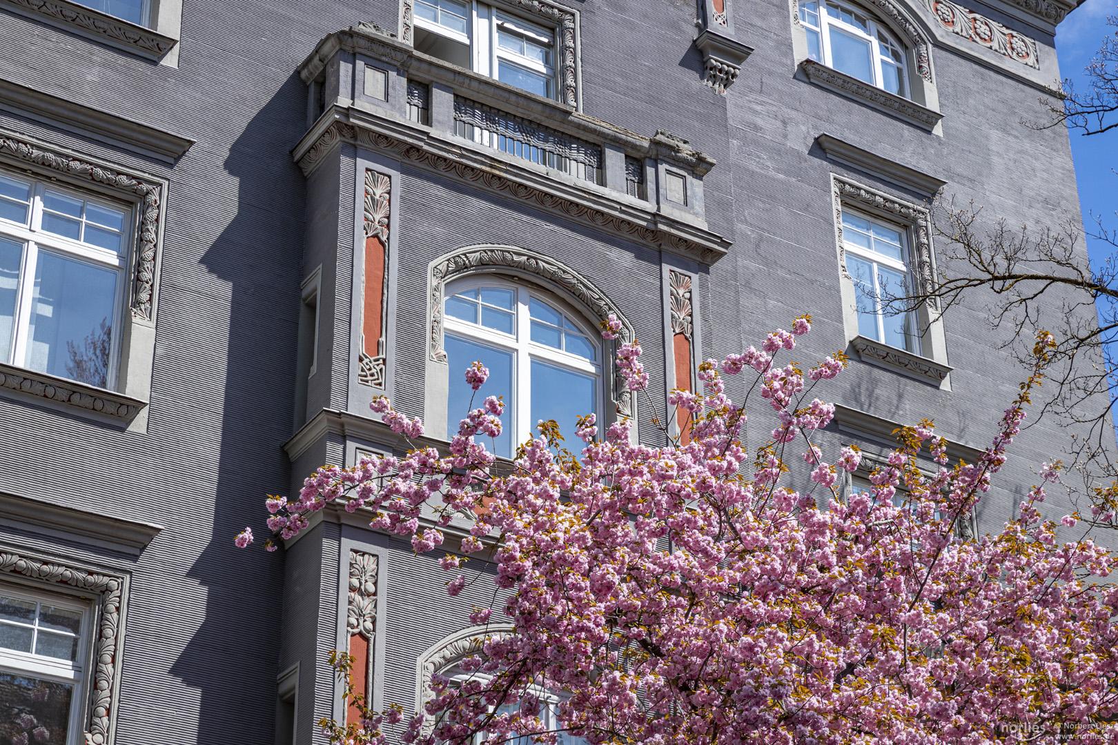 Kirschblüte beim Jugendstilhaus