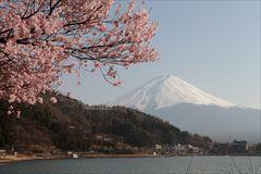Kirschblüte beim Mount Fuji