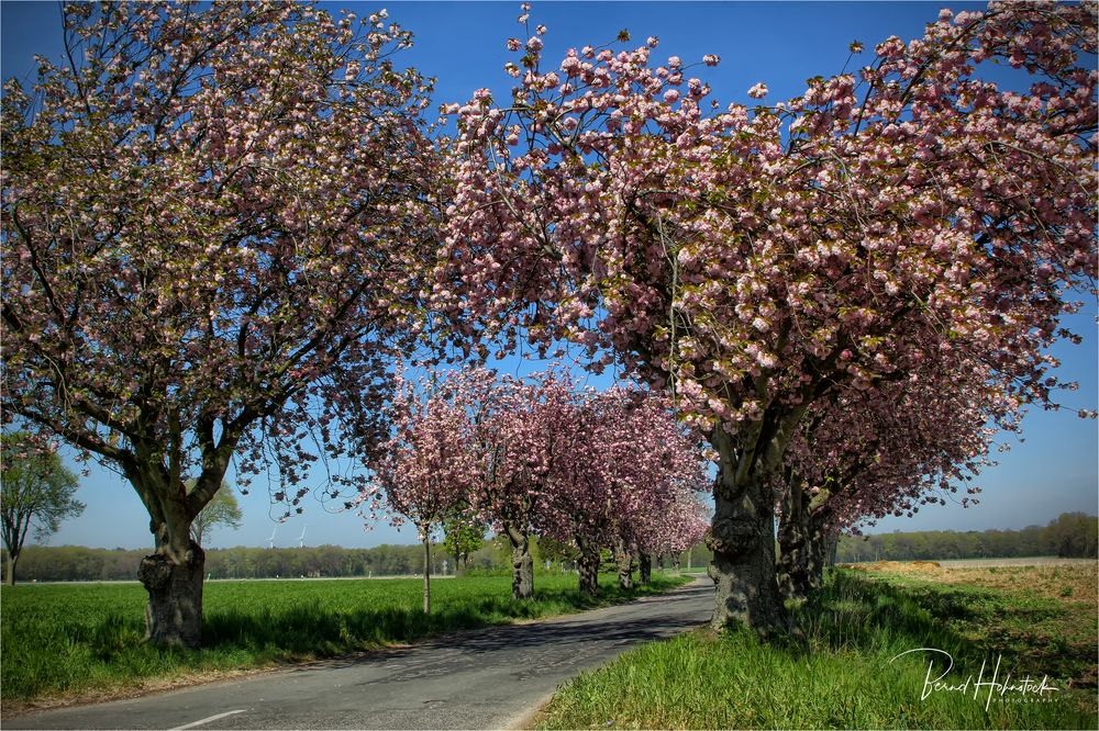 Kirschblüte im Naturpark Schwalm - Nette ...