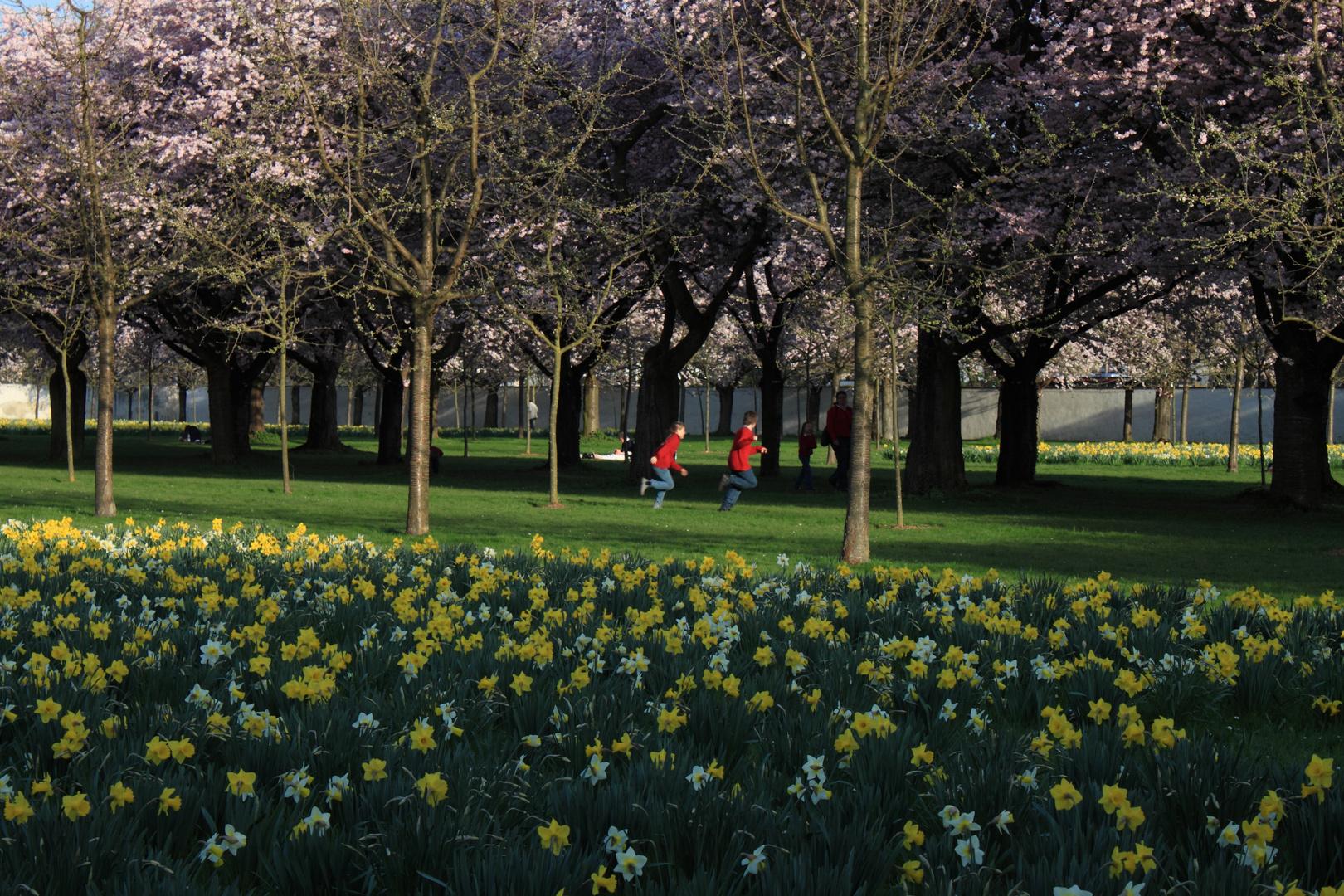 Kirschblüte im Schlosspark Schwetzingen (2)