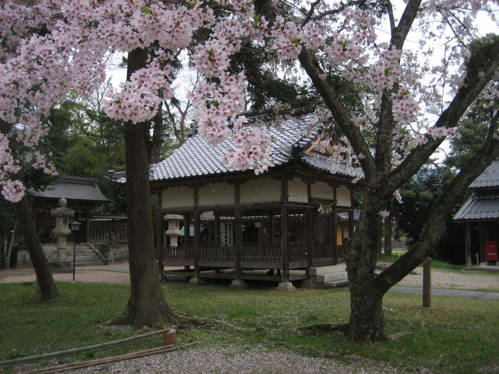 Kirschblüte und Tempel in Makino am Biwa-See