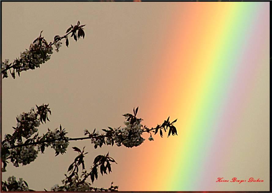 Kirschblüte vor Regenbogen I Merenberg Westerwald Über der Höhburg Heinz Brayer Dieken 24.4.2012 20: