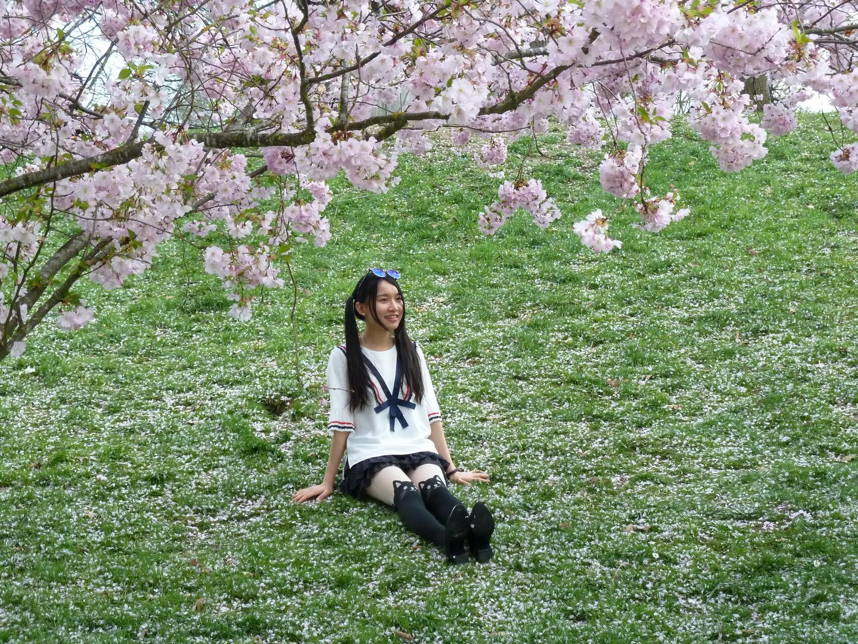 Kirschblüten – Hanami