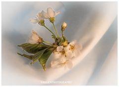 Kirschblüten VI