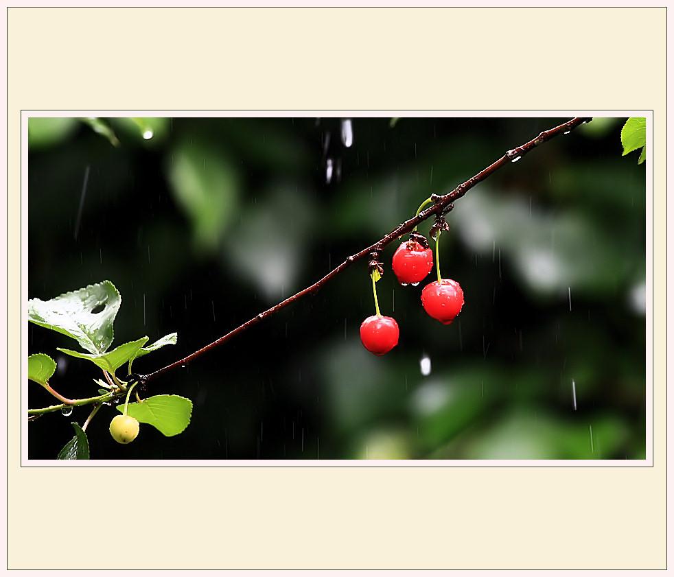 ...kirschen im regen...