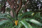 Kirstenbosch National Botanical Gardens 56