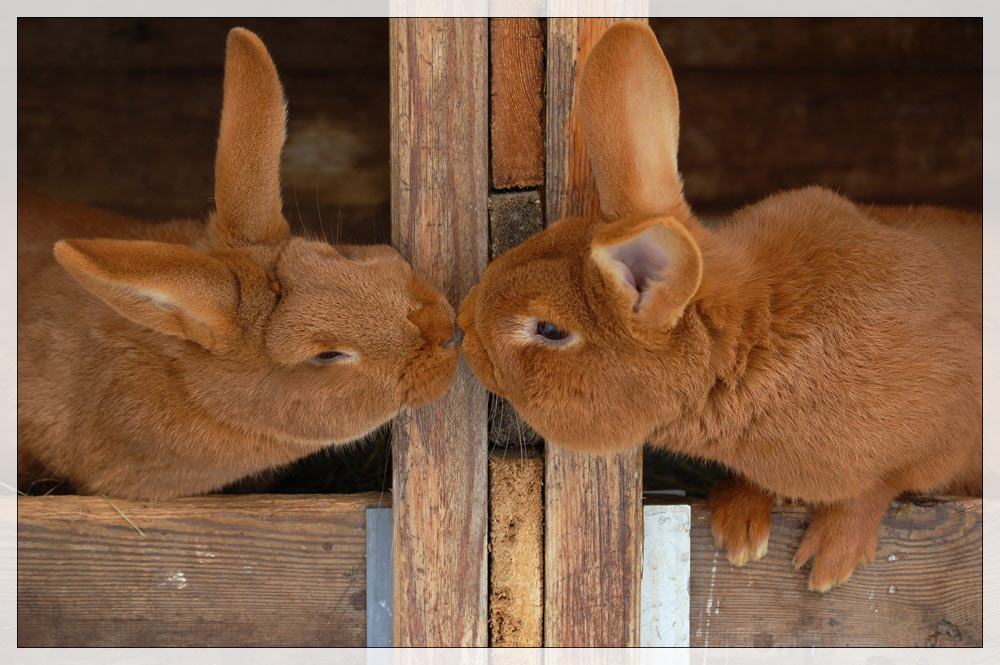 *kiss*