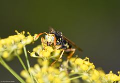 - Kiss of a Wasp -