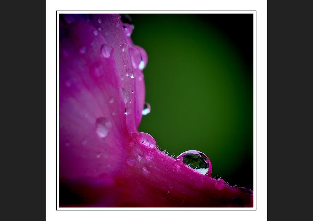Kiss the rain *