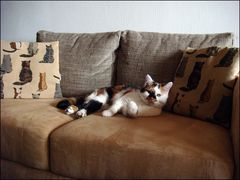 Kissen und Couch - für die Katz' !