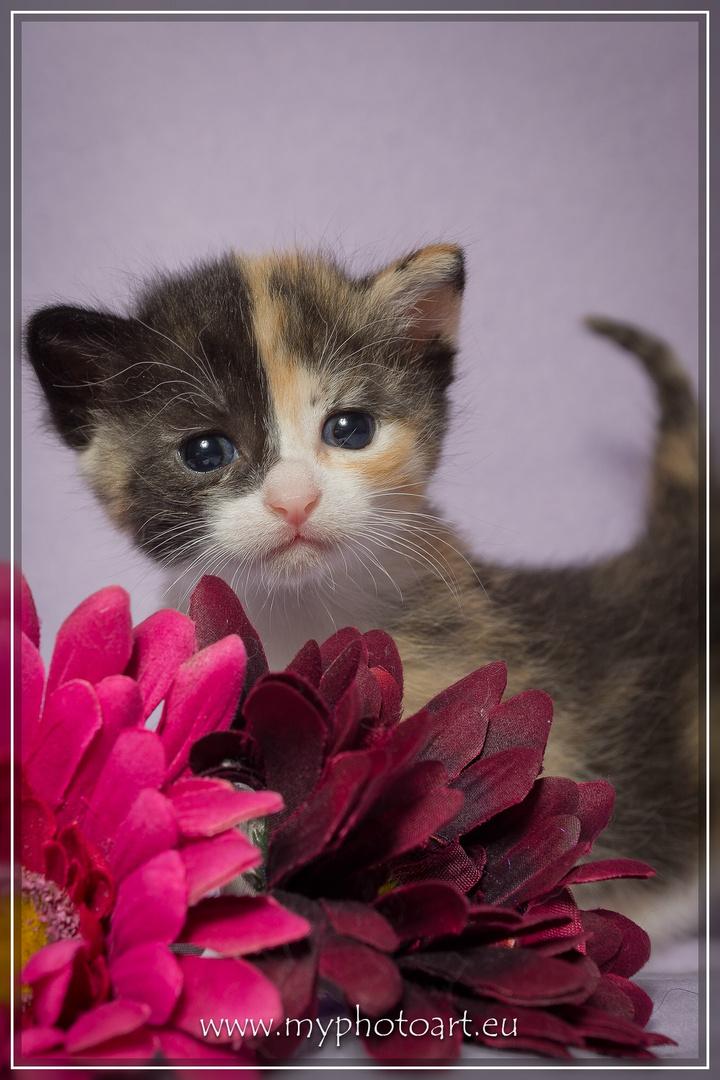 Kitten 2 Wochen jung